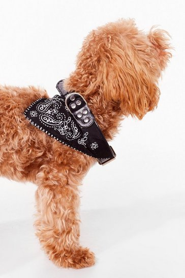 Black Howl You Doin' Bandana Dog Collar