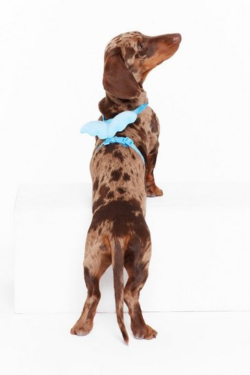 Womens Baby blue My Little Angel Winged Dog Harness